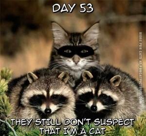 funny-cat-pics-raccoon